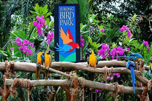 پارک پرندگان جورانگ