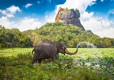 نحوه صرفه جویی در هزینه های سفر به سریلانکا